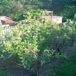 Mavis Mail – Tamera From Washington Sends in Garden Pics