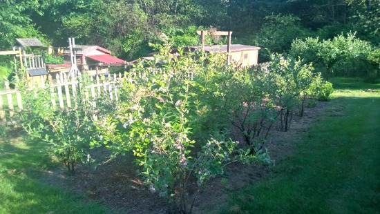 Mavis Mail – Tamera From Washington Sends in Garden Pics