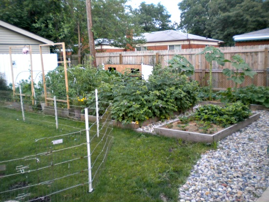 Mavis Mail – Kim From Michigan Sends in Pics of her Certified Monarch Butterfly Garden