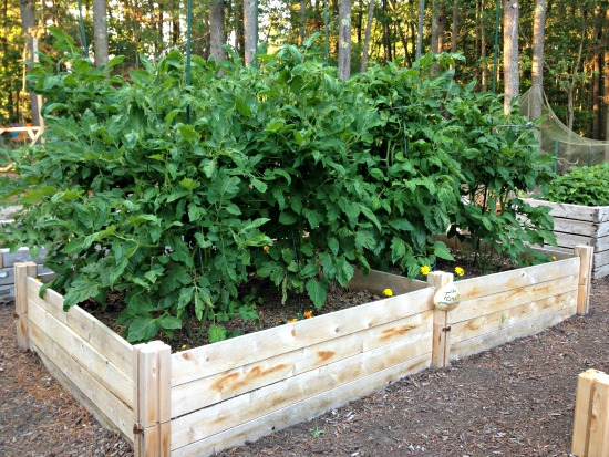 Monthly Garden Chores for July – East Coast Edition
