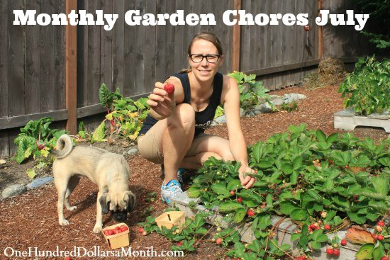 Monthly Garden Chores – July
