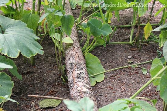 Mavis Butterfield   Backyard Garden Pictures 7/22/14