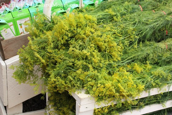 how to keep dill fresh for pickling
