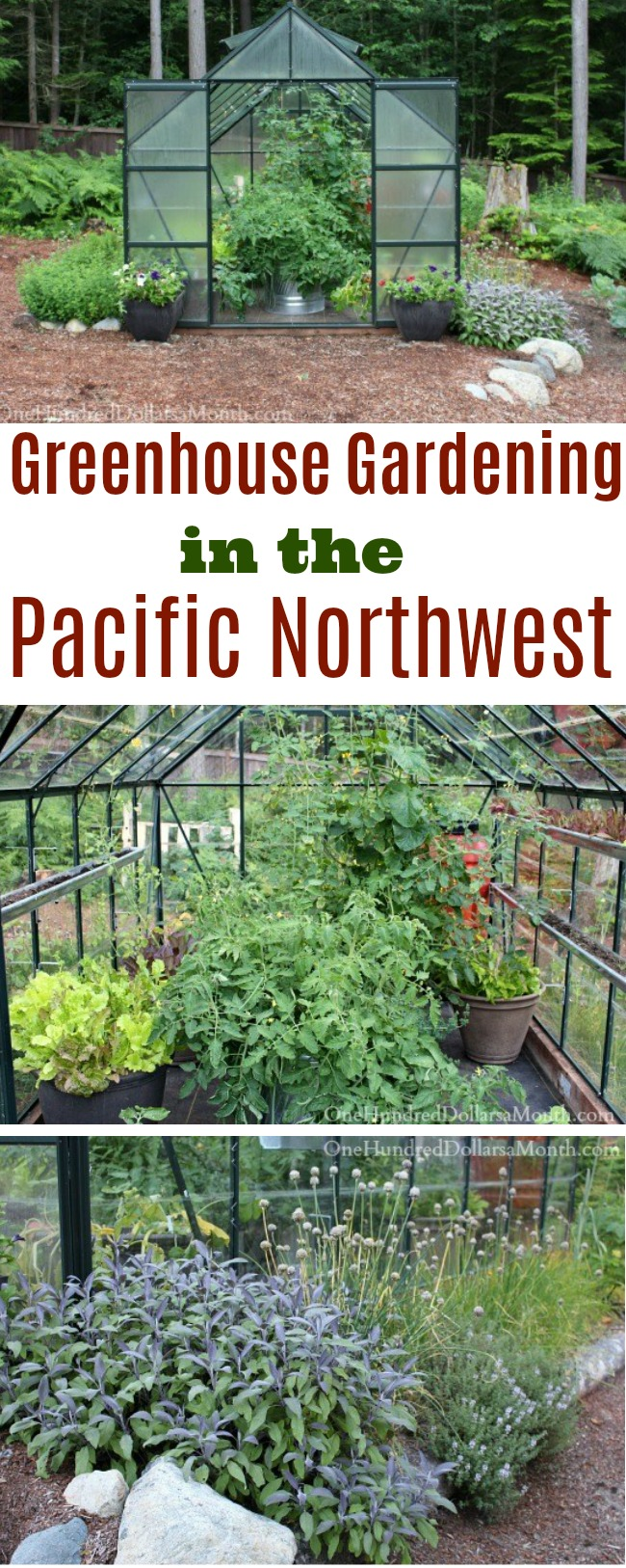 Greenhouse Gardening in the Pacific Northwest – Tomatoes, Herbs and Lettuce