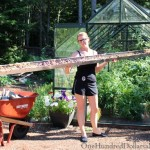 growing lettuce in gutters greenhouse