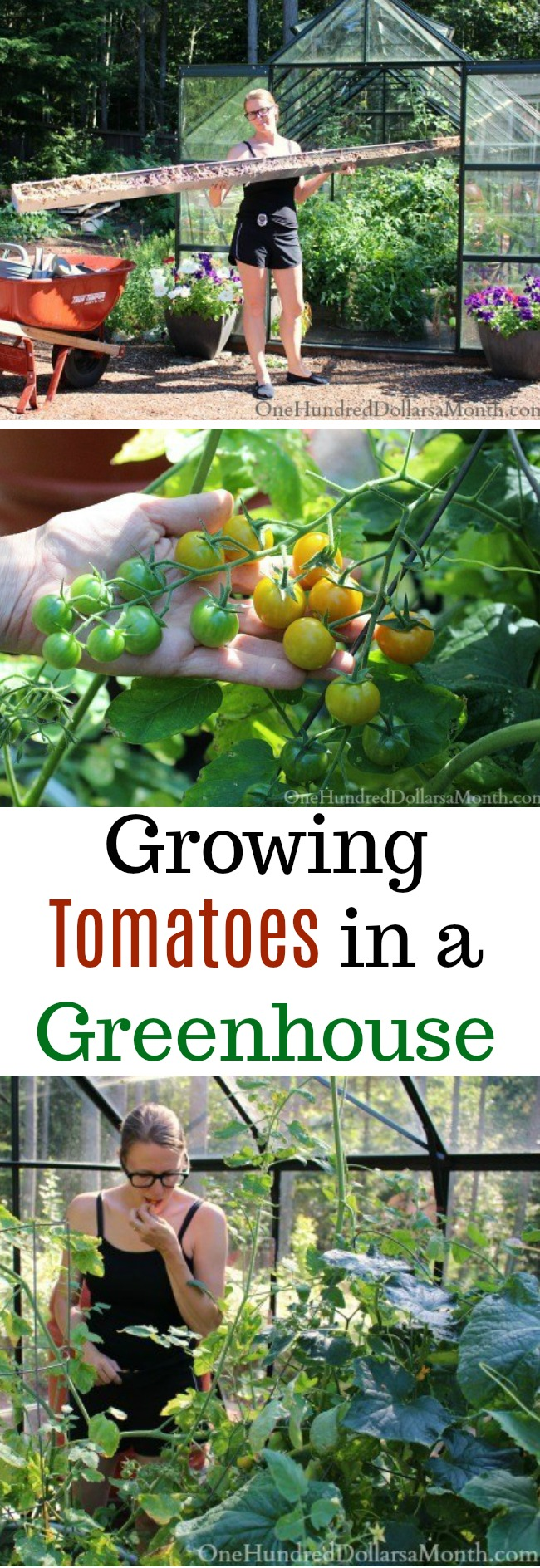 Growing Vegetables in a Greenhouse – Tomatoes and Cucumbers