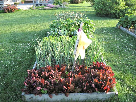 joy from michigan sends in pictures of her garden and garden shed