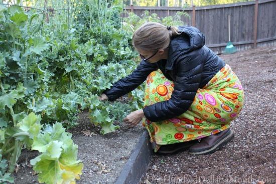 mavis butterfield picking kale
