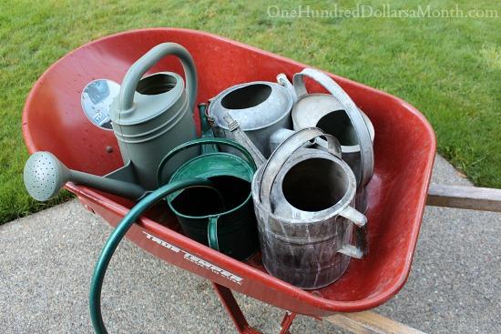Mavis Butterfield | Backyard Garden Pictures 7/13/14