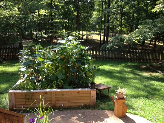 A Small Garden from Virginia Packs a Lot of Vegetables into a 6×8 Foot Raised Bed