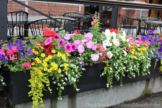 flower box ideas b c flowers flowers and more flowers one 29416