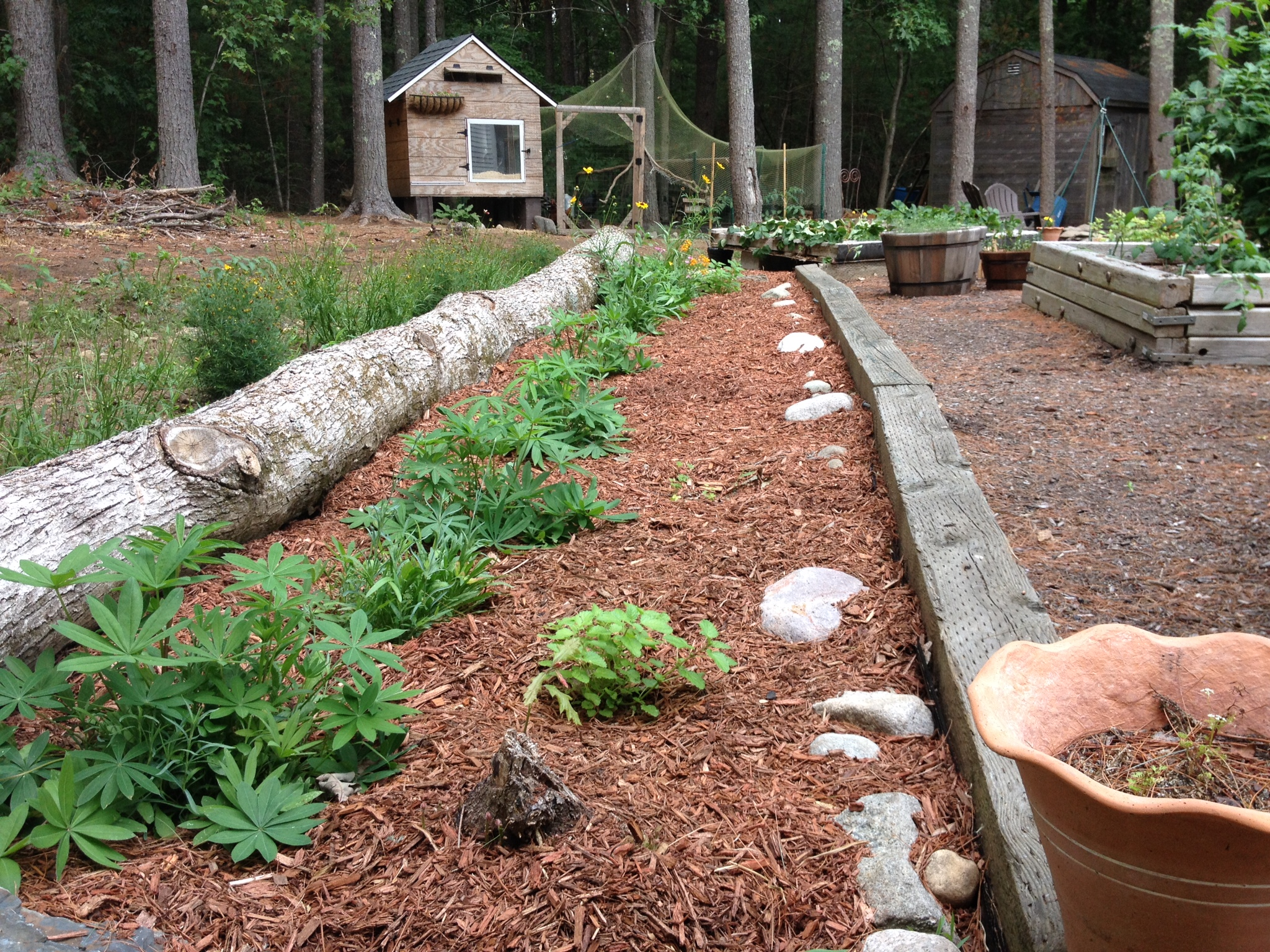Monthly Garden Chores for August – East Coast Edition