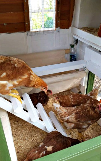 Mavis Mail – Melissa From Maryland Sends in Her Chicken Coop Pics