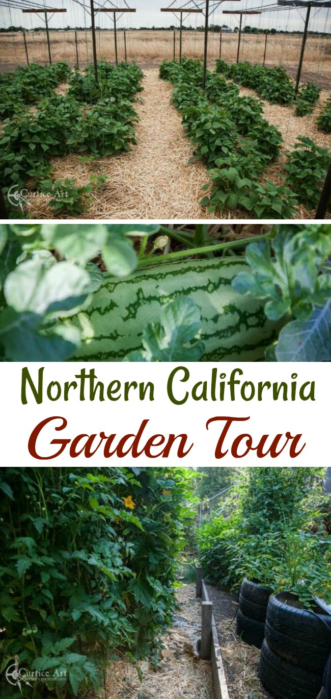 Bob and Sherle Share Their California Vegetable Garden Photos