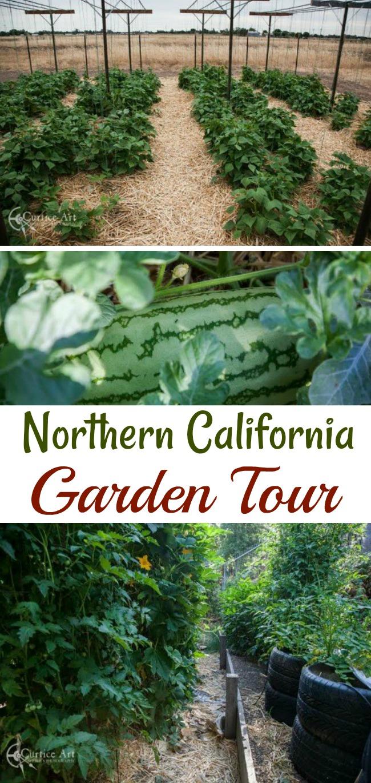 Bob and Sherle Share Their California Vegetable Garden Photos
