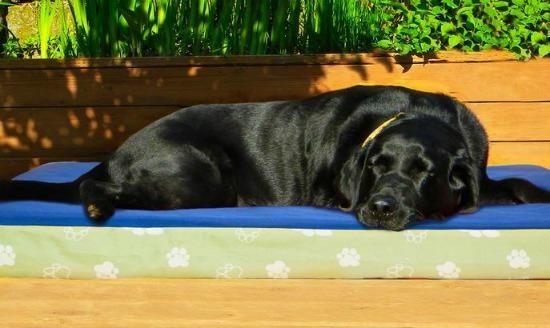 outdoor pet bed