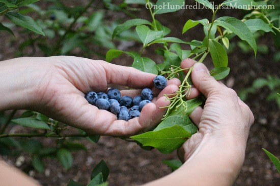 We Now Interrupt This Blog… To Pick Fruits and Vegetables