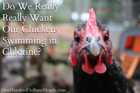 Do We Really Really Want Our Chickens Swimming in Chlorine