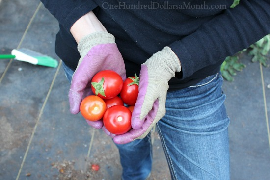 Mavis Garden Blog – It's Time to Clean Out the Greenhouse