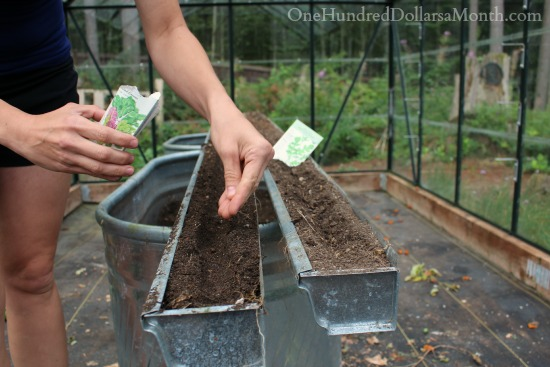 It's Time to Plant Lettuce in the Greenhouse!