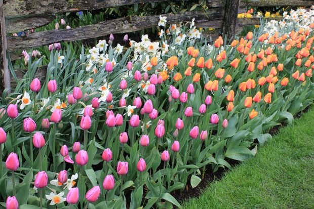 Plant Tulip Bulbs in Fall for a Colorful Spring Garden