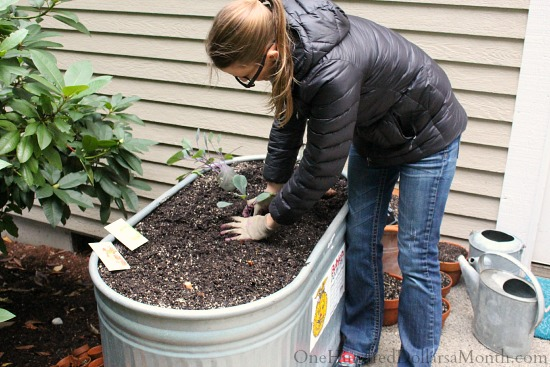 Mavis Garden Blog – Planting Cabbage and Lettuce for My Winter Garden