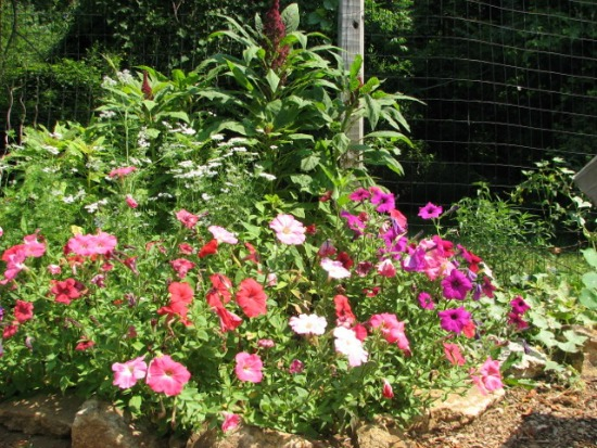 Mavis Mail – Alison From Pennsylvania Sends in Pictures of Her Colorful Garden