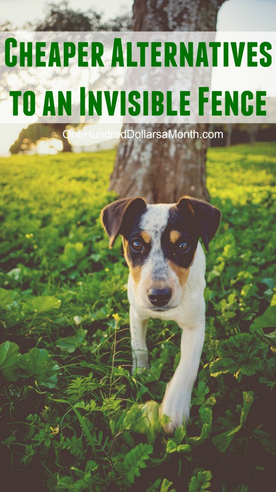 What are the Cheaper Alternatives to Invisible Fence?