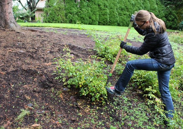 When is the Right Time to Transplant Rosebushes?