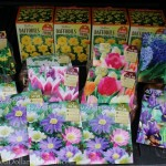 fall bulbs on sale