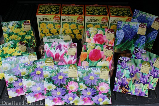 Spring Bulbs 50% off at The Home Depot