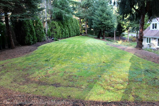 Mavis Garden Blog – Mapping Out My 2015 Garden