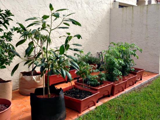 Mavis Mail – Genevieve From South Florida Sends in Garden Pics