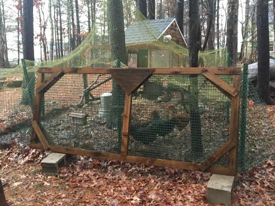 netting over chicken coop