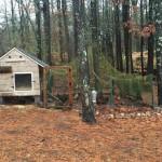 rustic chicken coop