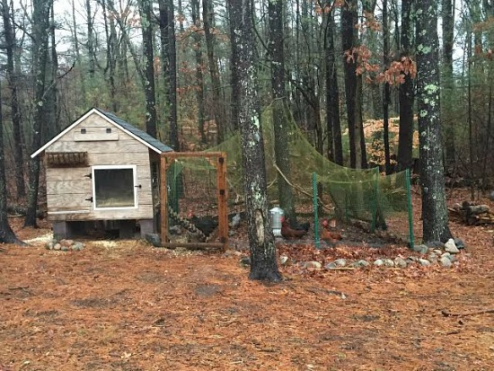 Heather's Winter Chicken Coop Tour