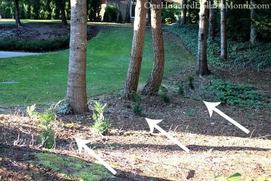 Mavis Butterfield   Backyard Garden Plot Pictures – 1/5/14