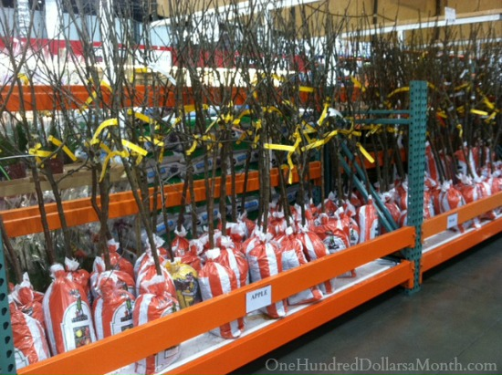 costco fruit trees