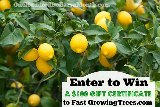 Giveaway: {2} $100 Gift Certificates to Fast Growing Trees!