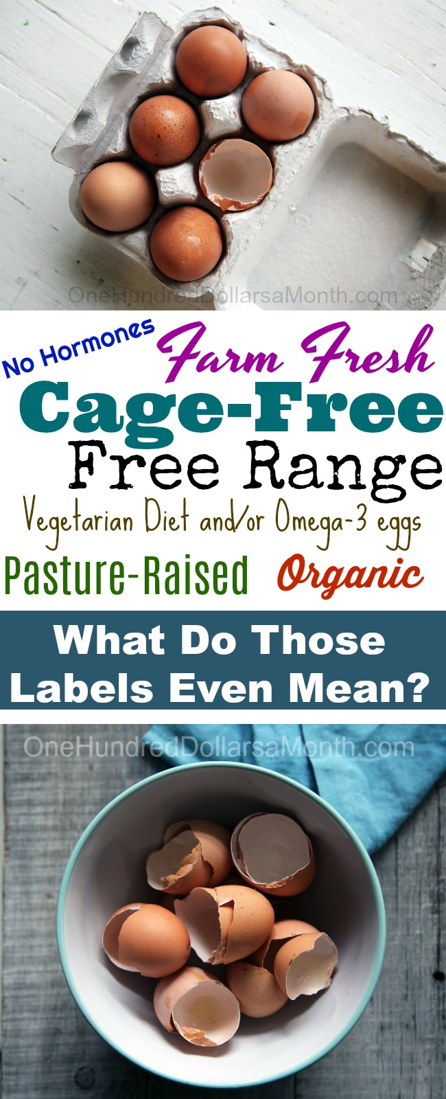 Buying Eggs From the Grocery Store – What Do the Labels Even Mean?