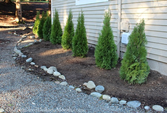 Rock Borders, Moving Daylilies and Digging up Dirt