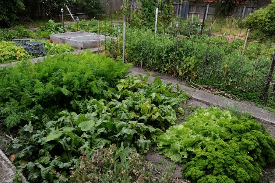 vegetbale garden