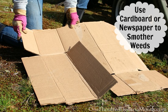 Use Cardboard or Newspaper to Smother Weeds