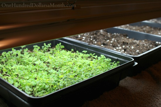 March Home Maintenance and Garden Chores