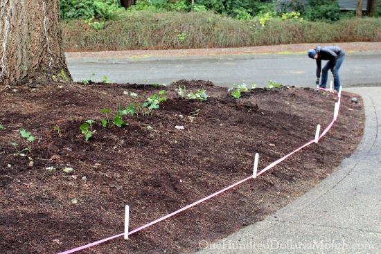Mavis Butterfield   Backyard Garden Plot Pictures 2/1/2015