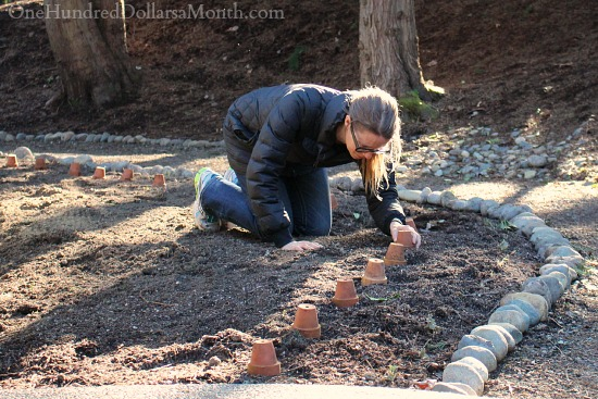Mavis Garden Blog – Moving Boxwoods and Planting Raspberries