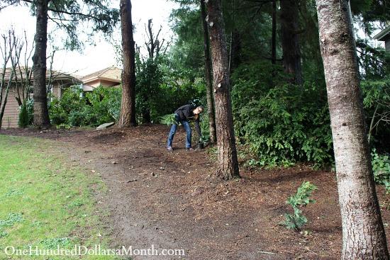planting leland cypress trees