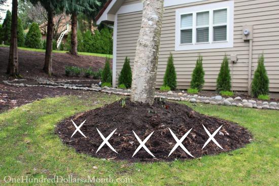 Mavis Garden Blog – Moving Rocks and Transplanting Tulips