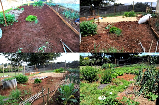 Lisa garden 2