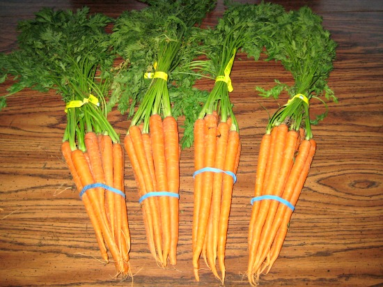 Canning 101 – Pickled Dill Carrots